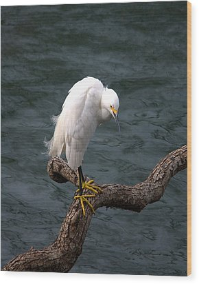 Snowy Egret Out On A Limb Wood Print