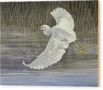 Snowy Egret Wood Print by Paul Krapf