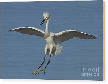 Wood Print featuring the photograph Snowy Egret Photo by Meg Rousher