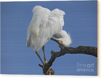 Wood Print featuring the photograph Snowy Egret Photograph by Meg Rousher