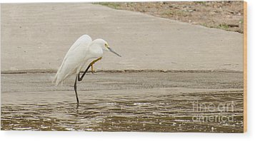 Snowy Egret Taking Advantage Of The Flood Wood Print by Donna Brown
