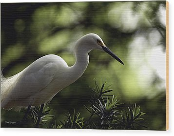 Wood Print featuring the photograph Snowy Egret by Travis Burgess