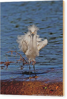 Snowy Egret With Yellow Feet Wood Print