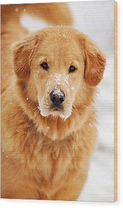 Snowy Golden Retriever Wood Print by Christina Rollo