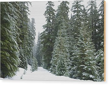 Snowy Mount Hood Forest Wood Print by Charmian Vistaunet