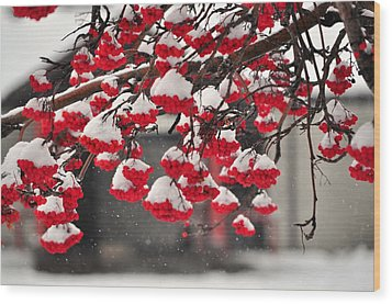 Wood Print featuring the photograph Snowy Mountain Ash Berries by Fran Riley