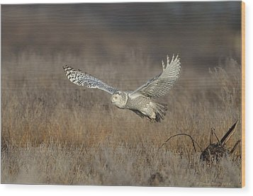 Snowy On The Wing Wood Print by Daniel Behm