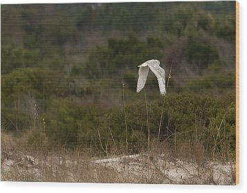 Wood Print featuring the photograph Snowy Owl Dune Flight by Paul Rebmann