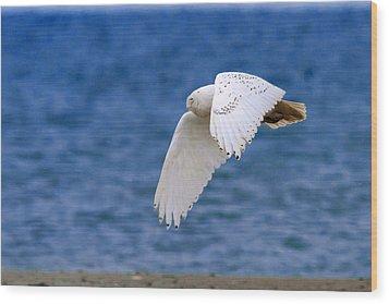 Snowy Owl In Flight Wood Print by Aaron Smith