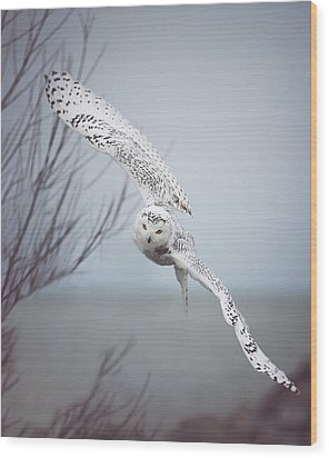 Snowy Owl In Flight Wood Print by Carrie Ann Grippo-Pike