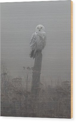 Snowy Owl  In The Mist Wood Print