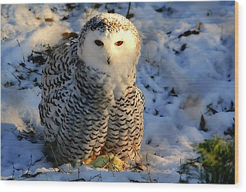 Snowy Owl Wood Print by Larry Trupp