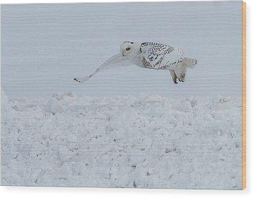 Snowy Owl #1/3 Wood Print by Patti Deters