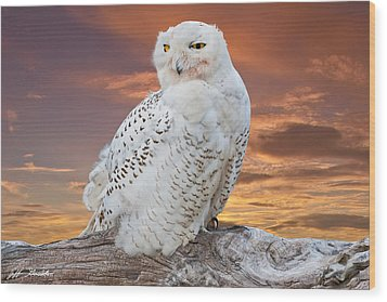 Snowy Owl Perched At Sunset Wood Print by Jeff Goulden