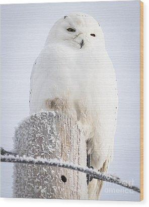 Snowy Owl Wood Print by Ricky L Jones