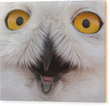 Snowy Owl Up Close And Personal Wood Print by Laura Duhaime