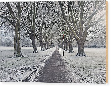 Snowy Path Through Jesus Green In Cambridge Uk Wood Print by Justin Paget