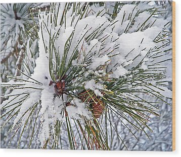 Snowy Pine Wood Print by Aimee L Maher Photography and Art Visit ALMGallerydotcom
