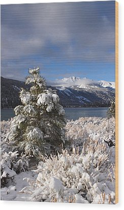 Snowy Pine  Wood Print by Duncan Selby