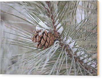 Snowy Pine Wood Print by Penny Meyers