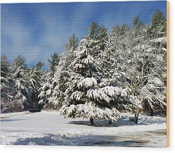 Snowy Pines Wood Print by Janice Drew
