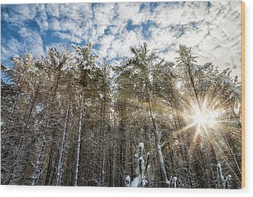 Snowy Pines With Sunflair Wood Print by Brian Boudreau