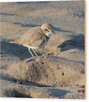Wood Print featuring the photograph Snowy Plover by Bob and Jan Shriner