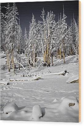 Snowy Silence Wood Print by Chris Brannen