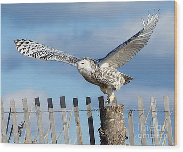 Wood Print featuring the photograph Snowy Takeoff by Stephen Flint
