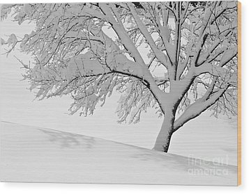 Wood Print featuring the photograph Snowy Tree by Jay Nodianos