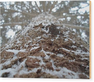 Snowy Tree Wood Print by Jenna Mengersen
