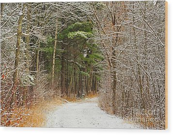 Snowy Tunnel Of Trees Wood Print by Terri Gostola