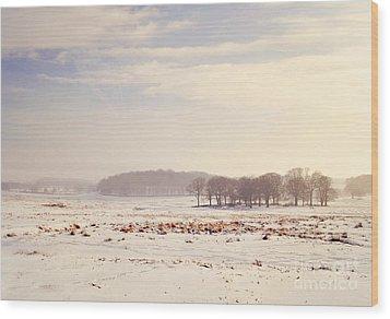 Snowy Valley Wood Print by Lyn Randle