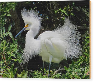 Snowy White Egret Breeding Plumage Wood Print by Jennie Breeze