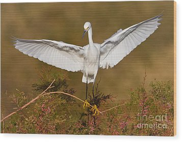 Wood Print featuring the photograph Snowy Wingspread by Bryan Keil