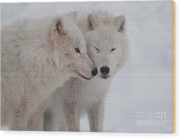 Snuggle Buddies Wood Print by Bianca Nadeau