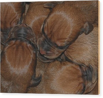 Wood Print featuring the photograph Snuggle by Mim White