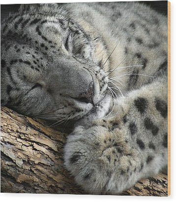 Snuggles Wood Print