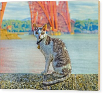 Snuggles The Cat Wood Print by Tylie Duff