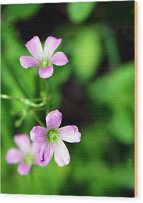 So Delicate In Purple. Texas Spring Perennial Wood Print