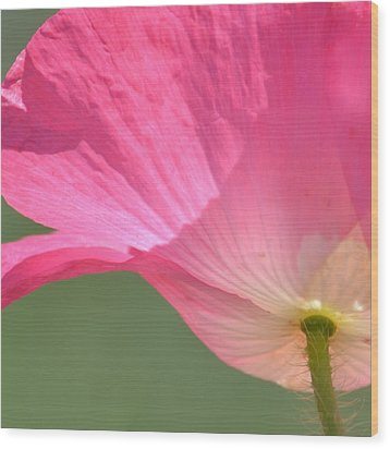So Pretty Pink Poppy Wood Print by P S