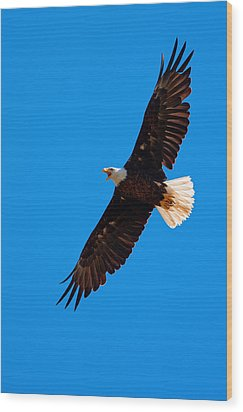 Wood Print featuring the photograph Soaring by Aaron Whittemore