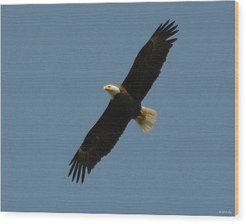 Soaring Bald Eagle Wood Print by Jeff at JSJ Photography