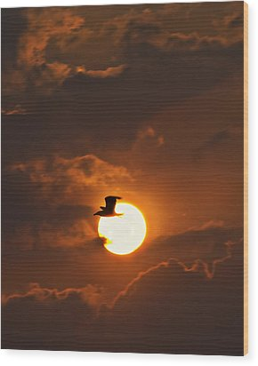 Soaring In The Sun Wood Print by Tony Reddington