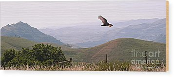 Soaring Over California - Condor In Morro Bay Coastal Hills Wood Print by Artist and Photographer Laura Wrede