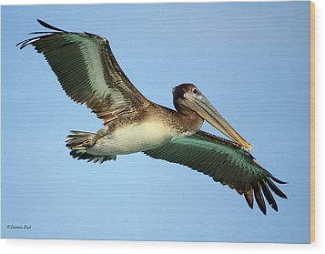 Wood Print featuring the photograph Soaring Pelican by Suzanne Stout