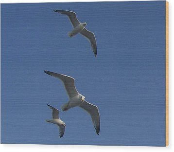 Soaring Seagulls Wood Print by Noreen HaCohen