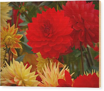 Wood Print featuring the photograph Sockeye And Upmost Dahlias by Jordan Blackstone