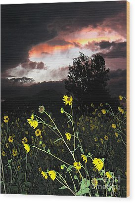 Socorro Sunset Wood Print by Steven Ralser