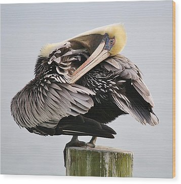 Soft And Delicate Pelican Wood Print by Paulette Thomas